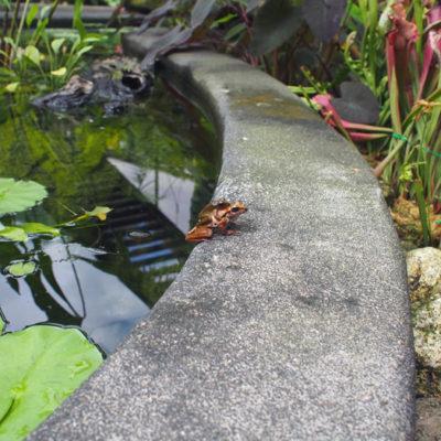 botanicgarden-flog