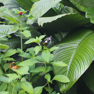botanicgardens-butterfly