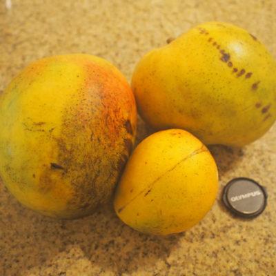 ラスティーズマーケットで買ったマンゴーの大きさ