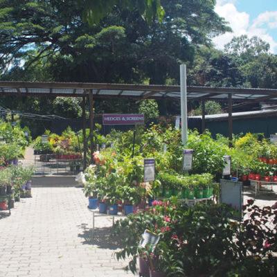 vines-limberlost-nursery