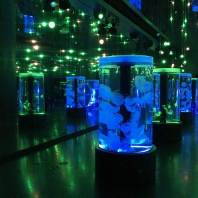 アクアパーク品川 クラゲ水族館