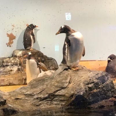 アクアパーク品川 ペンギン