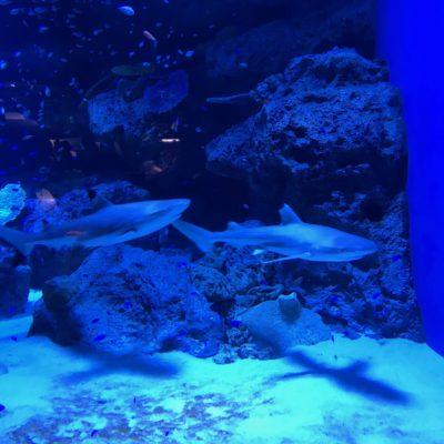 アクアパーク品川 サメ