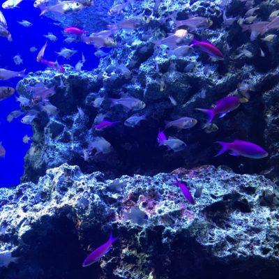 アクアパーク品川 熱帯魚