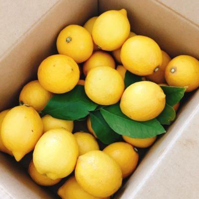 メルカリで買ったレモン